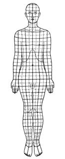 linee-calligaris