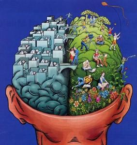 cervello-283x300